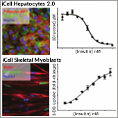 Application: Utility of iPSC-derived Human Cells for Diabetes-related Phenotypic Screenin