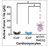 Application: Assessment of Force of Contraction of a Human Induced Pluripotent Stem Cell-derived Cardiomyocyte Cell Line