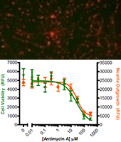 Measuring Neuronal Cell Viability and Neurite Outgrowth